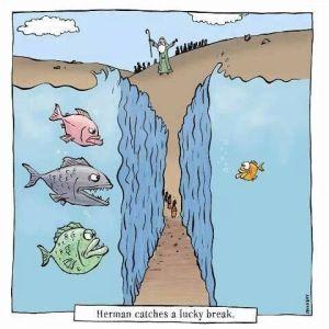 Herman's lucky break