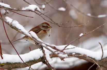 A A Sparrow